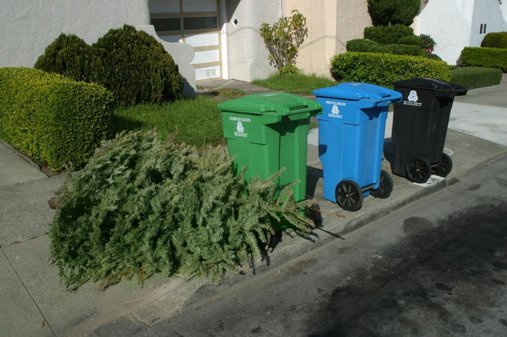 Christmas Tree Recycling program